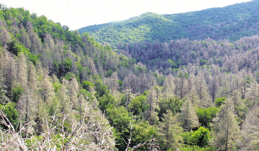Spread By Trade And Climate, Bugs Butcher America's Forests