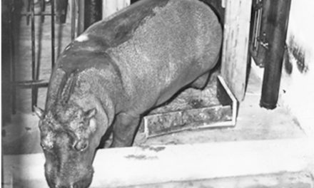 In 1953, A Little Girls Sang About Wanting A  Hippopotamus For Christmas, And She Got One!
