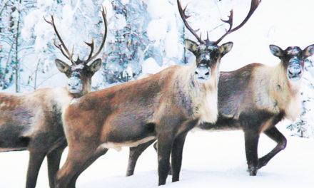 The Three Other Reindeer