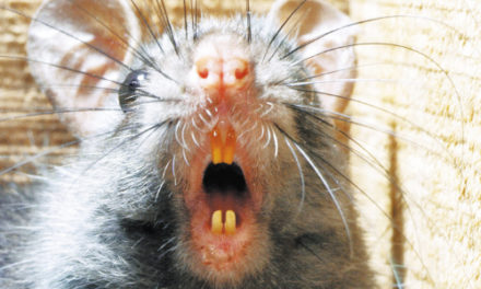 Rats! DC Wages War Against Resurgent Rodents With Dry Ice
