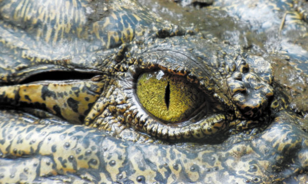 Police Face The Unexpected: Crocodile In Basement