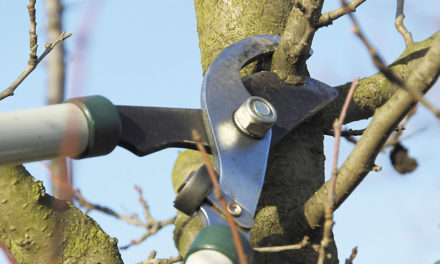 Pruning Discussed At Advanced Gardener Meeting On January 11