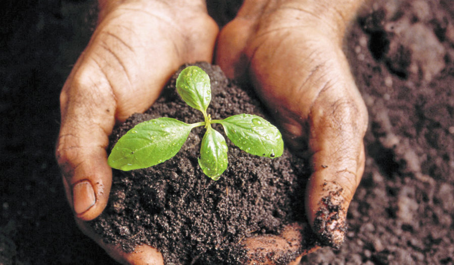 Soil, Composting & Nutrients At Gardener Workshop On March 8