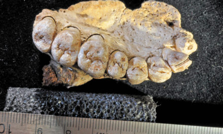 Though Disputed, Fossil Of Jawbone Found Points To Much Earlier Exit Of Humans From Africa