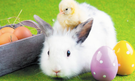 Got Egg
