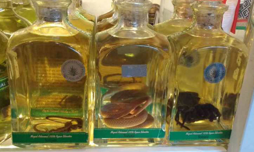 Mexico Seizes Mezcal Bottles With Snakes And Reptiles Inside