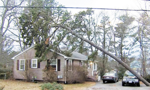 Heroic Jeep Saves Home From Fallen Tree During The Nor'easter