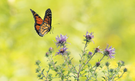 Flowers, Shrubs & Pollinator Gardens On Thursday, April 12, 6pm at Patrick Beaver Library