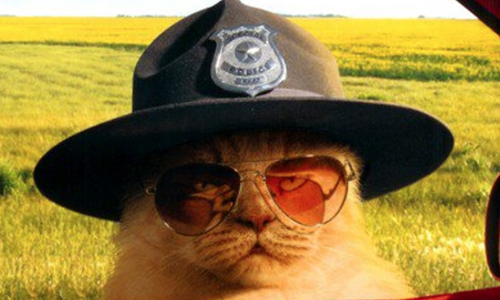 Put Your Paws Up: Detroit Police Department Adds Cat To Force