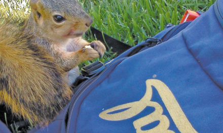 Squirrel Wins UC Berkeley Student Senate Seat