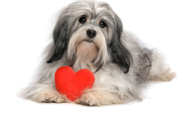 Humane Society Of Catawba County Offers $15 Heartworm Test For Doggos Throughout May!