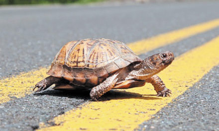 Thou Shalt Not Roadkill
