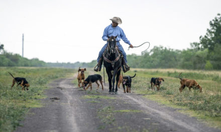 Texan Trains Coonhounds To Track Rhino Poachers In South Africa