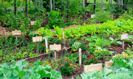 Vegetable Gardening For A Resilient Community At Advanced Gardener Series On Thurs., May 10