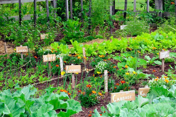 Vegetable Garden Beginner Pots
