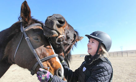 Woman Retrains Retired Race Horses So They Can Have A Job