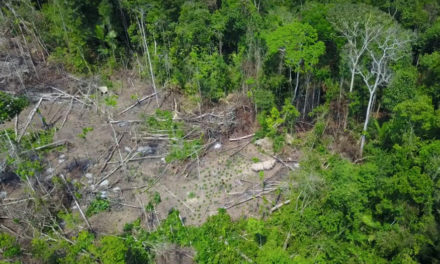 Drone Shots Show Isolated Tribe In Brazil's Amazon Forest