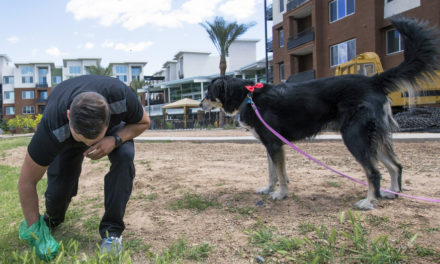 When All Else Fails, Spend $2500 To Identify DNA In Dog Poop