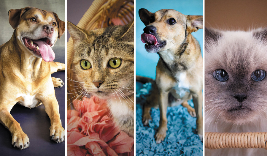 These Pets Have Been Waiting For Families For A Very Long Time At Local Humane Society
