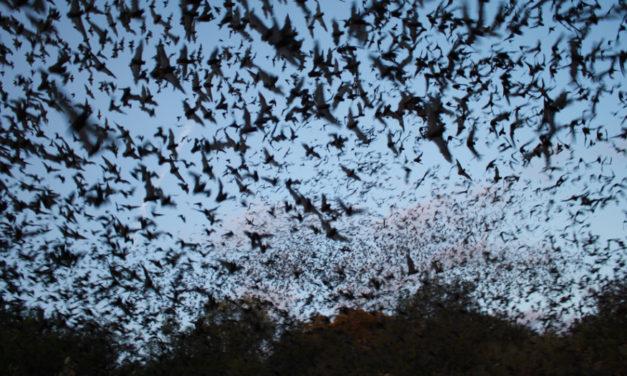 Dense Swarm Of Bats Causes Delays At Vienna Airport