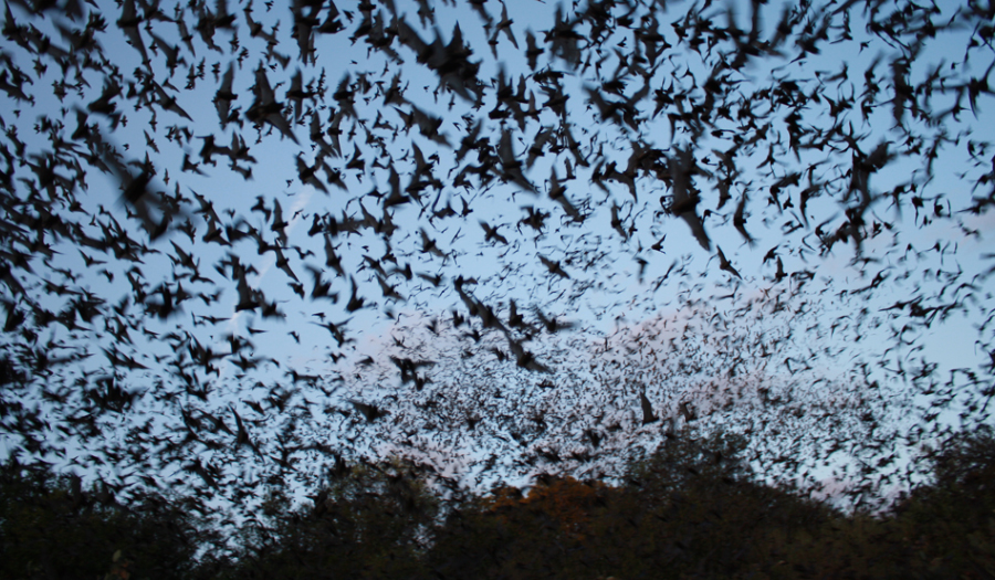 Dense Swarm Of Bats Causes Delays At Vienna Airport