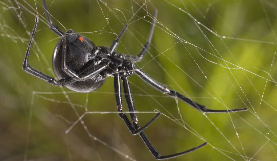 Eek!!! Spiders Spin Giant Web Over Shore In Greece