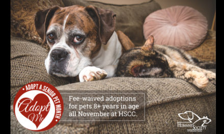 It's Adopt A Senior Pet Month – Fees Are Waived! Go On, Adopt!