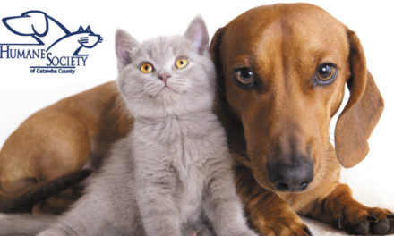 Help The Humane Society On #GivingTuesday, November 27
