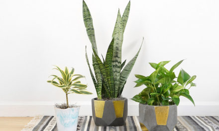 Houseplant Workshop At The Ridgeview Library On Jan. 24