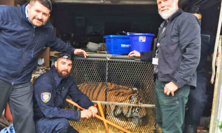 Dude…Is That A…A TIGER? Pot Smokers Find A Beastie!