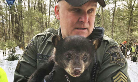 Bear Family Found Living In Highway Median Had To Move