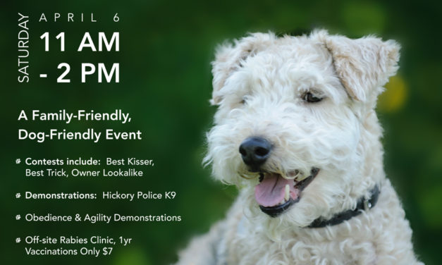 Hickory Spring Bark Party, Next Saturday, April 6, 11am-2pm