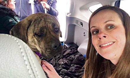 PA Trucker Gets Beloved Dog Back After 25 Days On The Loose