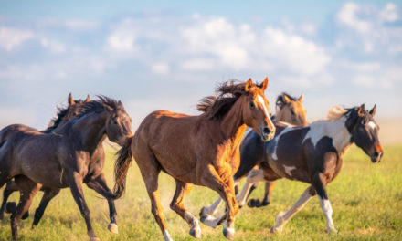 Private Pastures Needed For Wild Horses In Western States