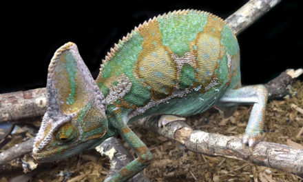 ReptiDay Winston-Salem: Wild, Wiggly and Wondrous, April 6