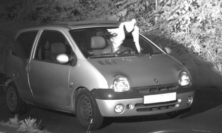 Guardian Angel Pigeon Protects Speeder From Ticket