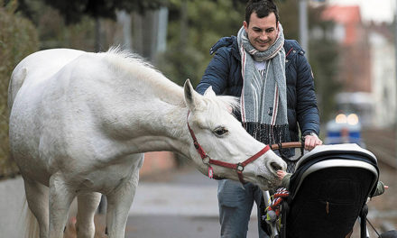 22 Year Old Horse Takes A Daily Stroll Through Town