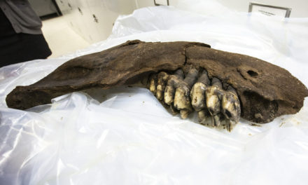 Teenager Finds Prehistoric Mastodon Jaw In Iowa