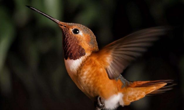How Birdwatchers Can Help Threatened Birds