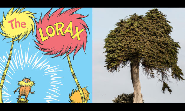 Tree That May Have Inspired Dr. Seuss Has Fallen