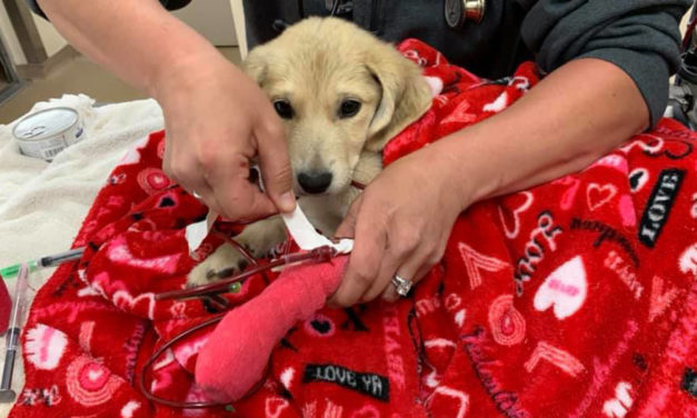 Puppy Found 13 Days After Car Crash Reunited With Owner