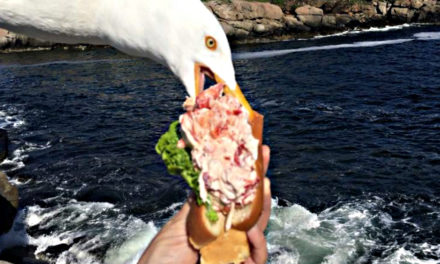 Seagull Photobombs And Steals Lobster Roll