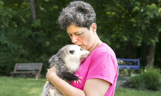 Orphaned Possums Inspire A Passion To Care For Them