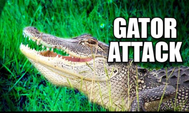 75-Year-Old Kicks Alligator To Save His Dog