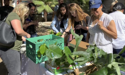 Plant Lovers Find Each Other  At Modern Plant Swaps