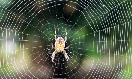 Library Of Spider Silk Could Hold Secrets For New Materials
