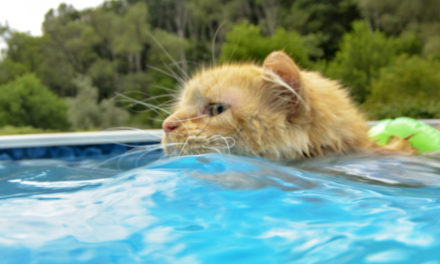 Cat Loves Cooling Off In The Pool And Swimming