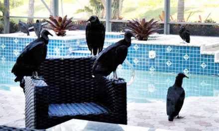 Vacation Home Taken Over  By Vomiting Vultures