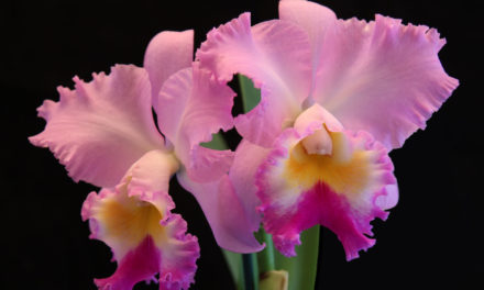 Ironwood Estate Orchids Annual Sale & Open House, 9/16 – 9/22