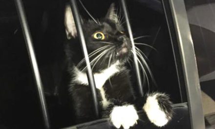 Cat Burglar Turns Out To Be A Cat